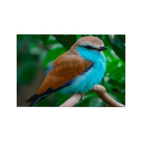 Lilac Breasted Roller Rectangle Magnet (100 pack)