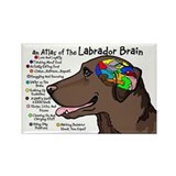 Chocolate lab magnet Single