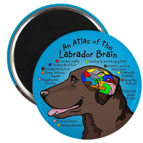 Chocolate Lab Brain Magnet