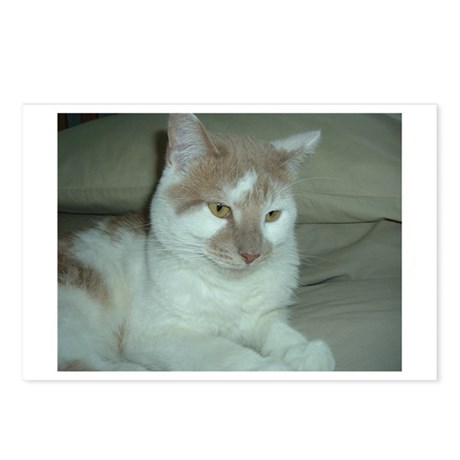 White and Tan Cat Postcards (Package of 8)