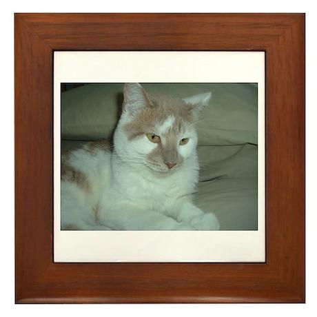 White and Tan Cat Framed Tile
