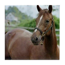 Cute Second chance ranch equine rescue Tile Coaster