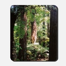 Redwoods Mousepad