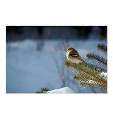 Gold Finch, Postcards (Package of 8)