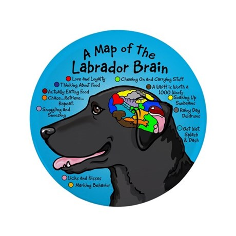 "Black Lab Brain 3.5"" Button"