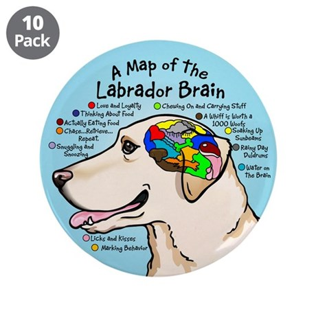 """Yellow Lab Brain 3.5"""" Button (10 pack)"""
