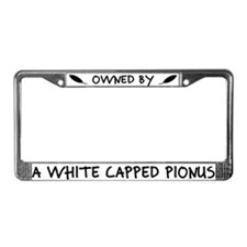 Owned by a White Capped Pionus License Plate Frame