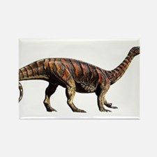 Plateosaurus Jurassic Dinosaur Rectangle Magnet