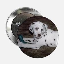Dalmatian Pup Button