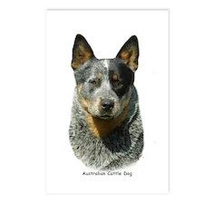 Australian Cattle Dog 9F061D-04 Postcards (Package