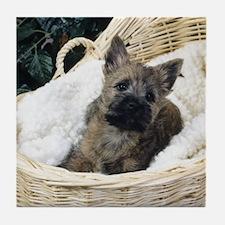 Cairn Terrier Pup Tile Coaster