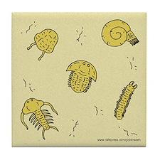 Trilobite Coaster