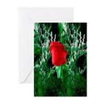 One Red Rose Greeting Cards (Pk of 10)