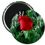 One Red Rose Magnet