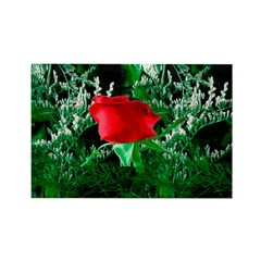 One Red Rose Rectangle Magnet (100 pack)