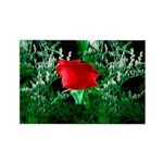One Red Rose Rectangle Magnet