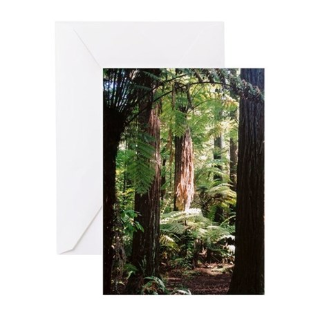 Redwoods Greeting Cards (Pk of 10)