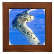 Cool Talon Framed Tile