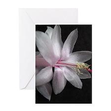 Cute White cactus blossom Greeting Card