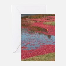 Cranberry Harvesting Greeting Cards (Pk of 10)