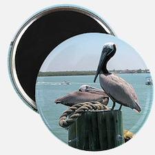 "Brown pelican 2.25"" Magnet (10 pack)"