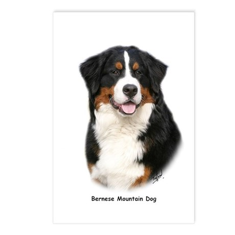 Bernese Mountain Dog 9Y348D-115 Postcards (Package
