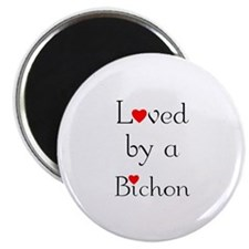 Loved by a Bichon Magnet