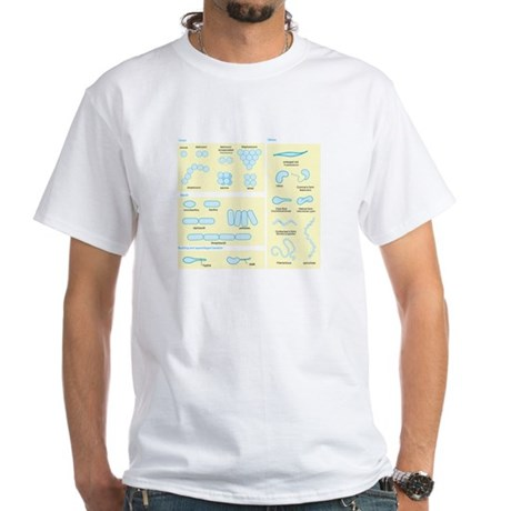 Morphology White T-Shirt