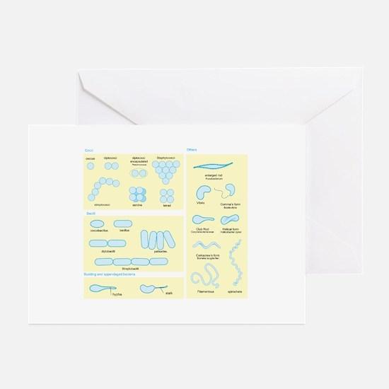 Morphology Greeting Cards (Pk of 10)