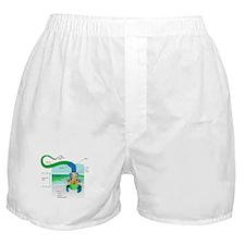 Morphology Boxer Shorts