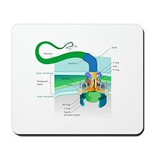Morphology Mousepad