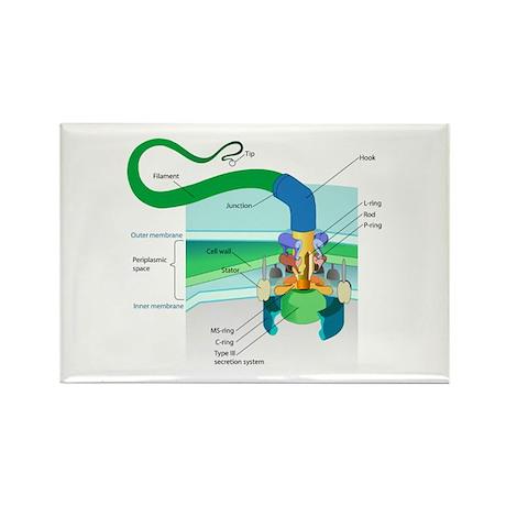 Morphology Rectangle Magnet (10 pack)