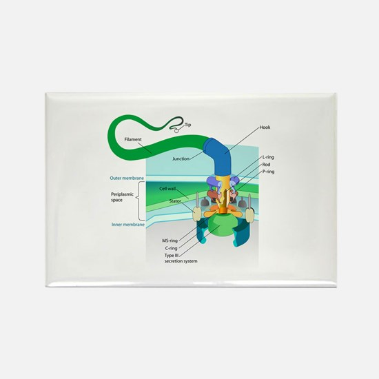 Morphology Rectangle Magnet