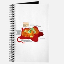 Animal Cell Journal