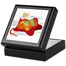 Animal Cell Keepsake Box