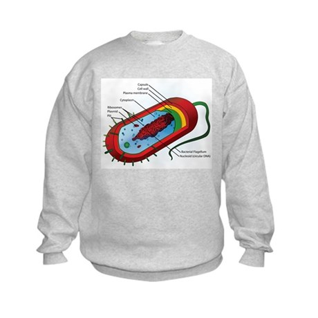 Bacteria Diagram Kids Sweatshirt