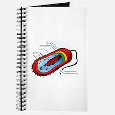 Bacteria Diagram Journal