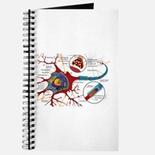 Neuron cell Journal