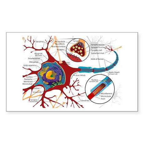 Neuron cell Rectangle Sticker