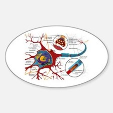 Neuron cell Oval Decal