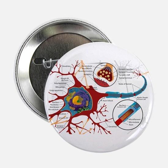 """Neuron cell 2.25"""" Button"""