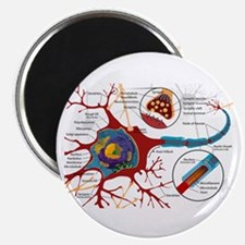 Neuron cell Magnet