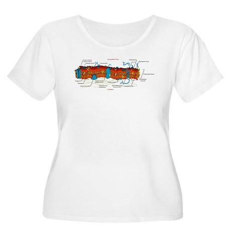 Cell Membrane Women's Plus Size Scoop Neck T-Shirt