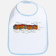 Cell Membrane Bib