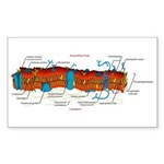 Cell Membrane Rectangle Sticker