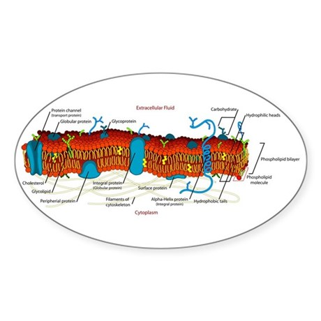 Cell Membrane Oval Sticker