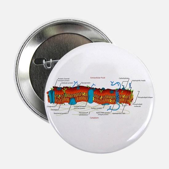 "Cell Membrane 2.25"" Button"