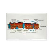 Cell Membrane Rectangle Magnet (10 pack)