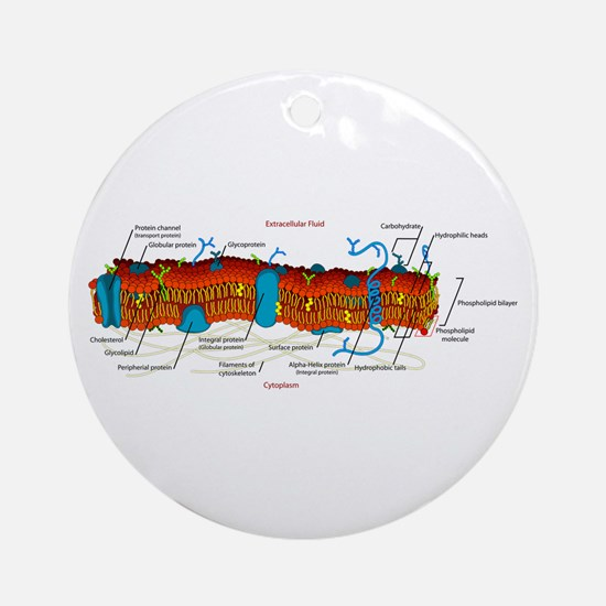 Cell Membrane Ornament (Round)