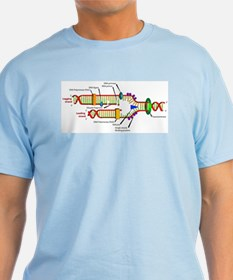 DNA Synthesis T-Shirt